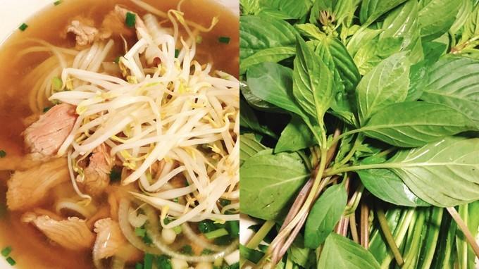吃货在越南的网红美食与景点打卡深度游路线攻略之Royal Saigon牛肉米粉