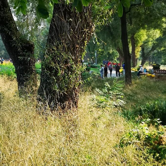 河北承德避暑山庄文艺自由行旅游攻略之树茂、草绿、鸟语、花香,移步异景