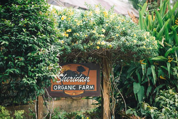 菲律宾超实用热带岛屿旅游美食行程攻略之Sheridan Organic Farm农场