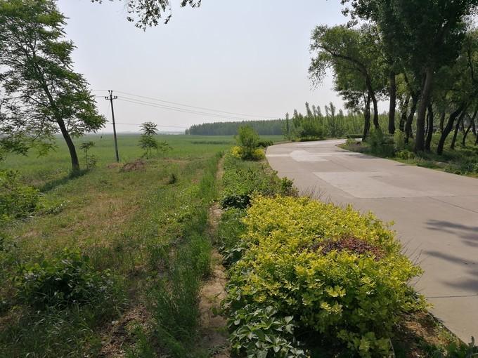 河北雄安新区旅游美食行程攻略之乡间小道路