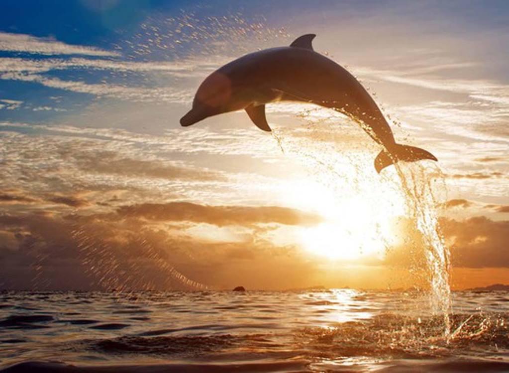 寻找小海豚-普吉岛4晚6天温馨小包团