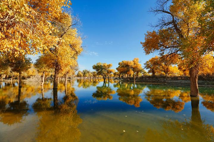 内蒙古大漠明珠额济纳旗自由行超实用游行程攻略之水境胡杨景区